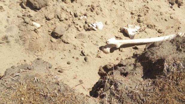 В Заринском районе нашли человеческие останки