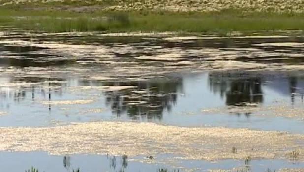 Озеро в райцентре Михайловское