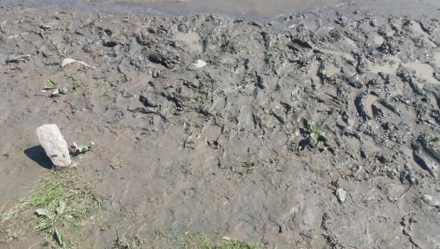 Бийчане жалуются на состояние центрального пляжа