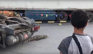 Крокодил на парковке в Новосибирске