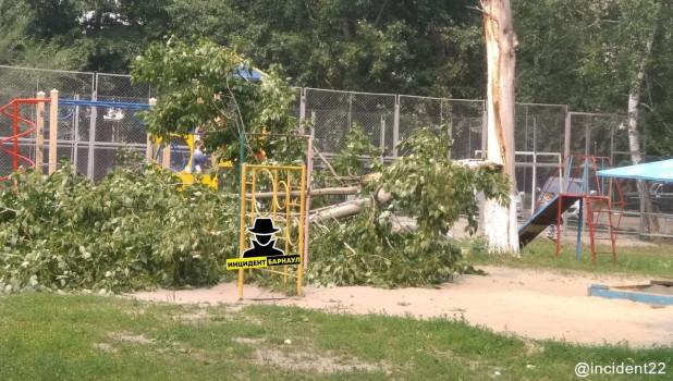 В Барнауле упало древо 14 июля.