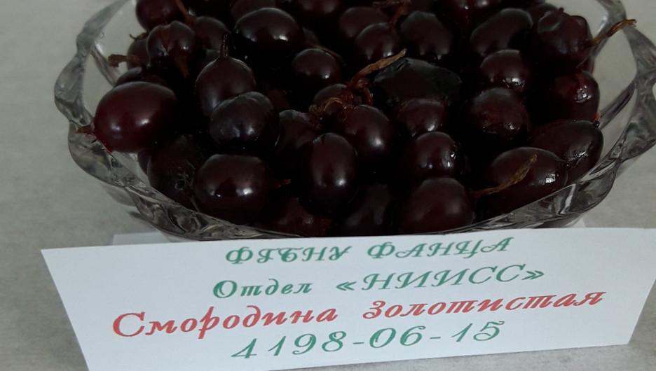 В НИИ имени Лисавенко представили новые уникальные сорта плодов и ягод