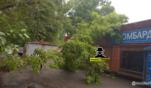 Дерево упал на ломбард.