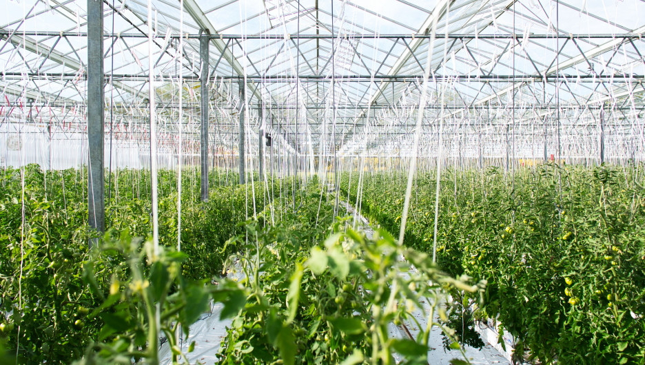 В Сайрамском районе Казахстана строят теплицу на 20 гектар.