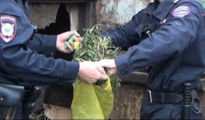 """Полицейские изъяли марихуану """"для кроликов"""""""