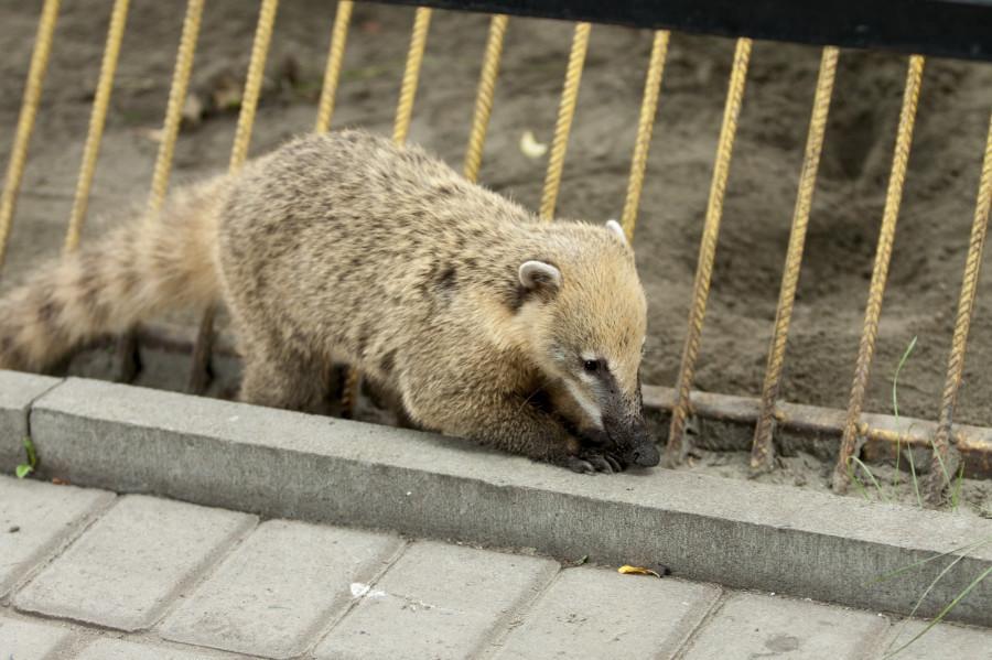 В барнаульском зоопарке.