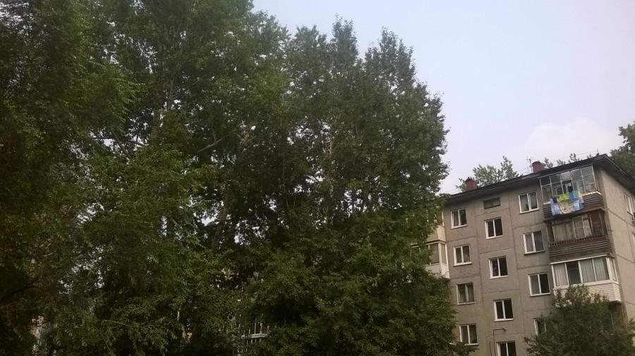 Деревья на ул. Георгия Исакова