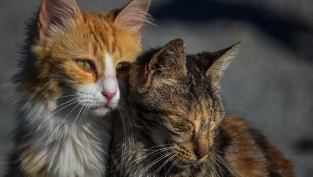 Коты. Бездомные животные