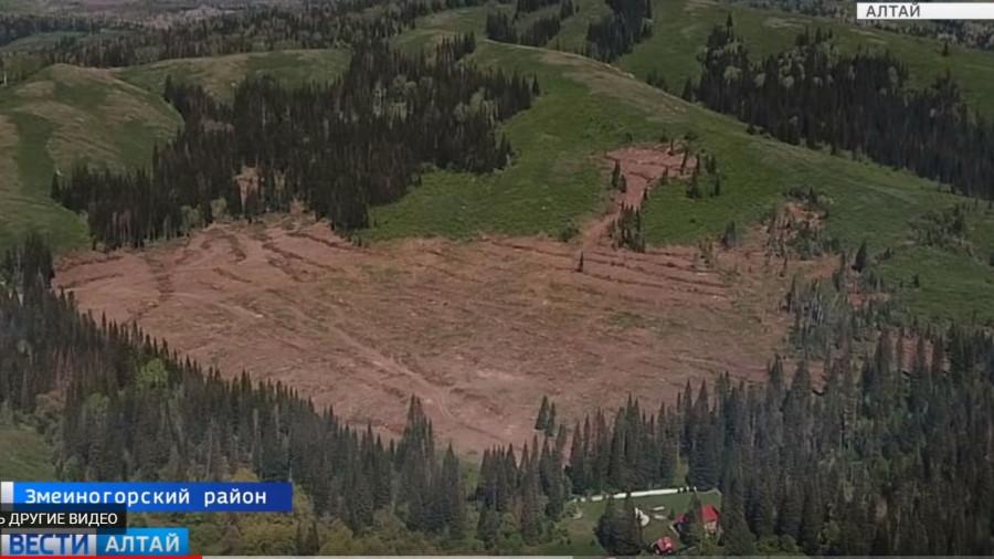 Рубки леса в Змеиногорском районе.