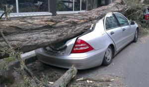 Дерево упало на автомобиль.