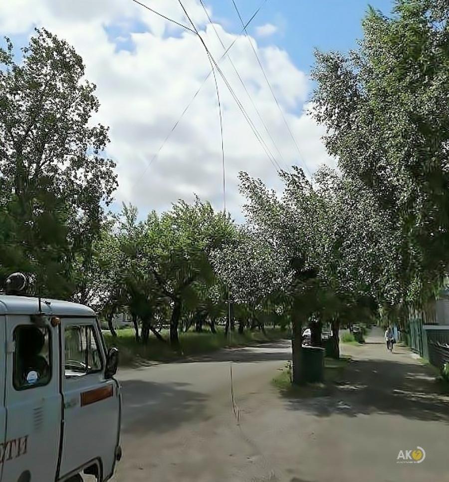 Фруктовым деревьям не место в охранных зонах ЛЭП!