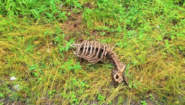 """Власти Бийска не нашли """"кладбище домашних животных"""" и назвали его фейком"""