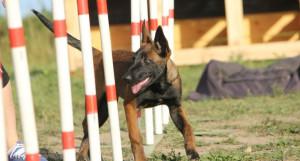 Дрессировка собак в Барнауле