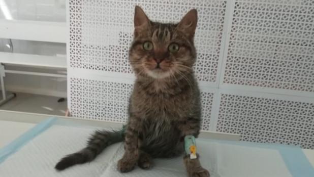 Русский дальнобойщик неменее 17 часов спасал умирающего кота