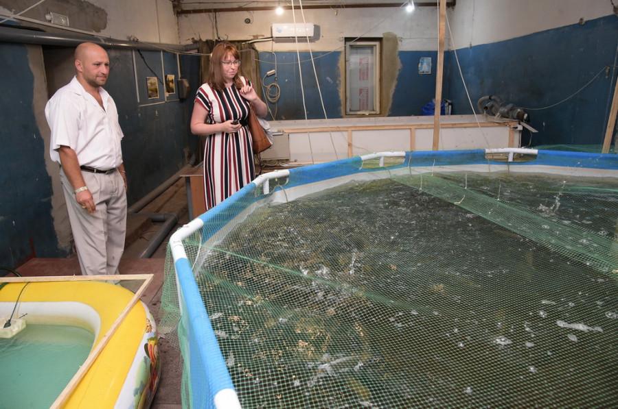 Алтайская рыбоводческая ферма.