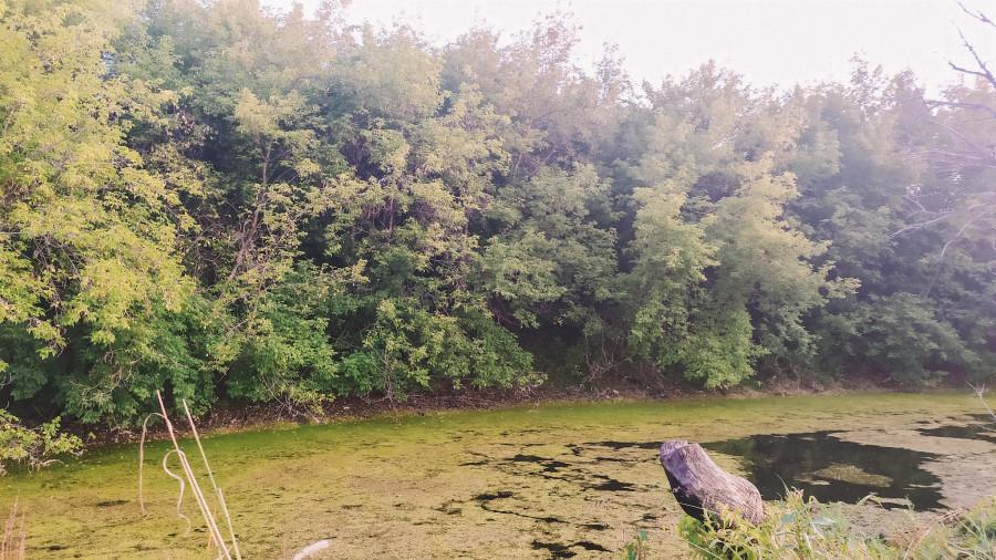 Микрорайон «Лосихин остров».