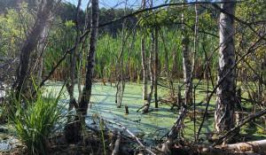 Неизвестное ранее круглое озеро в Каменском районе.