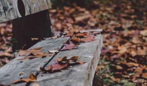 Скамейка, осень.