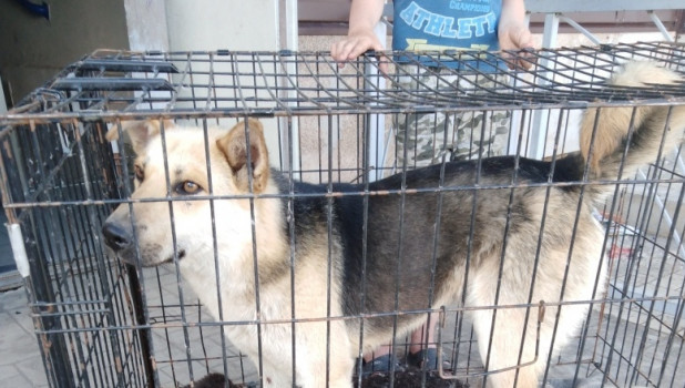Погибший в посёлке Коченёво пёс.
