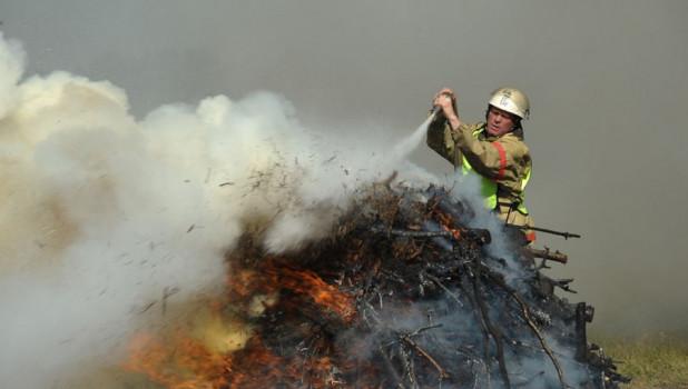 В Алтайском крае ленточные боры охраняют от пожаров арендаторы лесных участков.