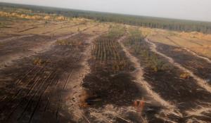 Пожары на территории Ключевского лесничества.