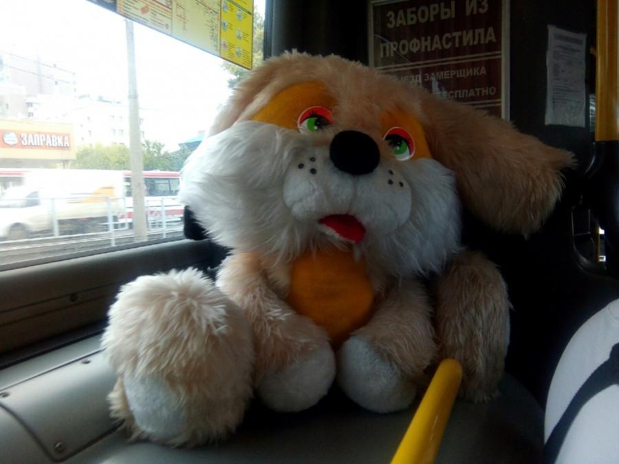 Необычный пассажир.