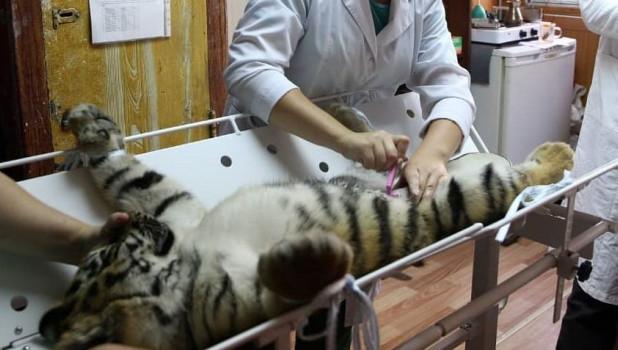 Операция тигренку