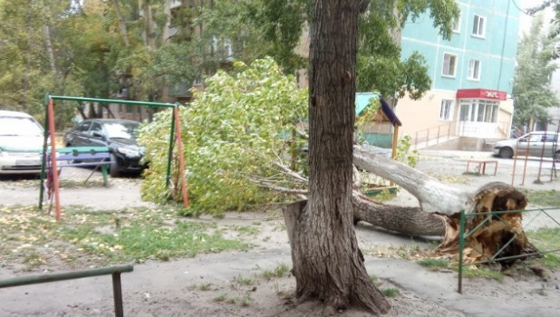 Ветер повалил деревья в Барнауле.