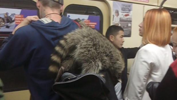 Енот в новосибирском метро