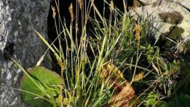 Новый вид растений в Тигирекском заповеднике.