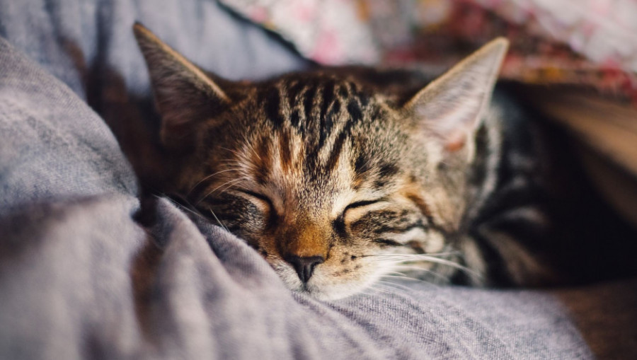 Отдых. Сон. Кошка