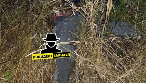 Под Барнаулом нашли труп мужчины.