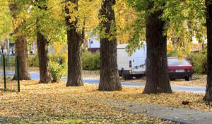 Золотая осень в Барнауле.