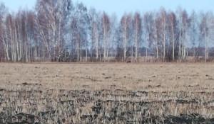 Рядом с алтайским селом заметили медведя.