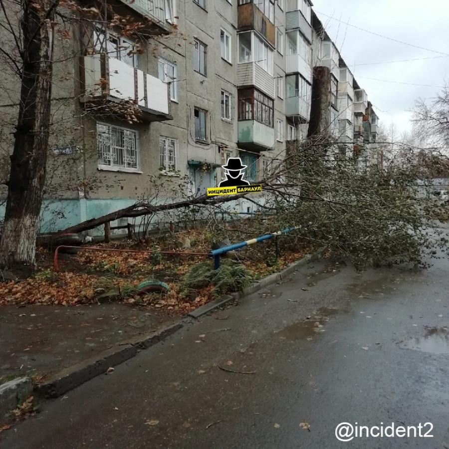 Упавшее дерево.