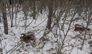 В Алтайском крае задержали браконьера.