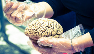 Мозг.