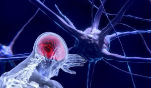 Мозг. Нейроны.