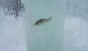 Рыбы в ледовом городке. Тюмень.