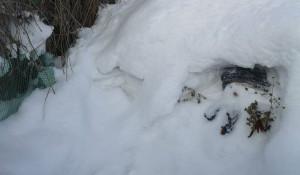 Много снега.