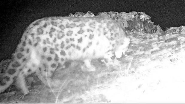 Фотоловушка зафиксировала ночных обитателей Сайлюгемского нацпарка.