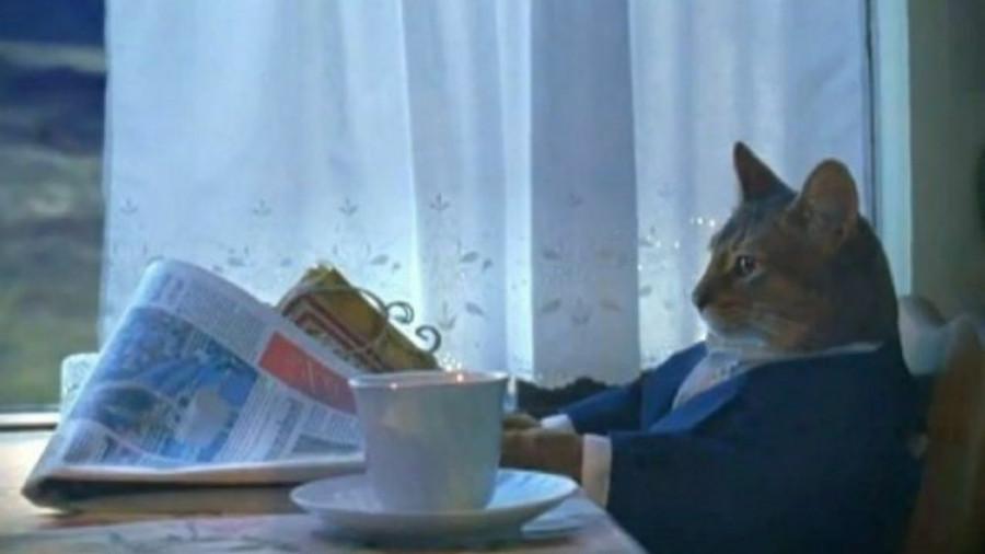 Кот с газетой.