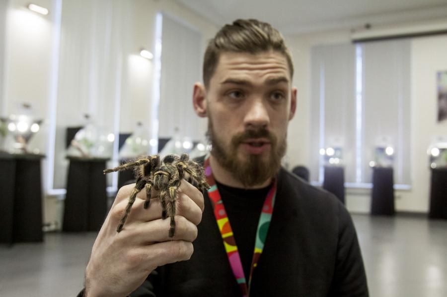 Выставка «Удивительный мир пауков».