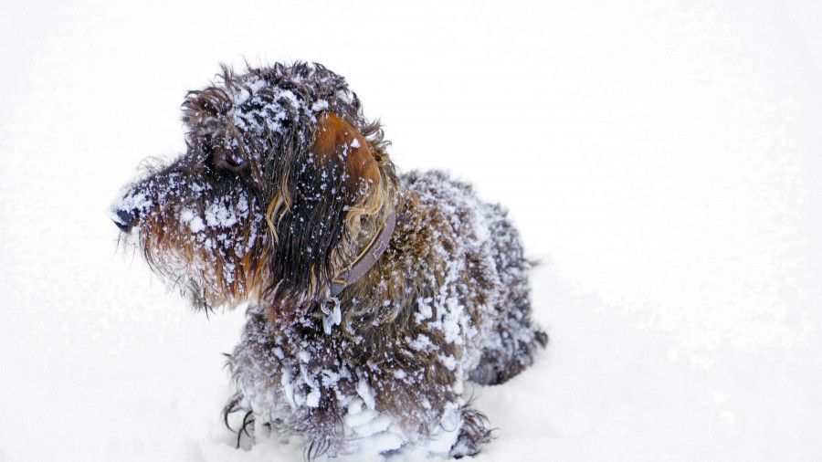 Зима, метель, снег.