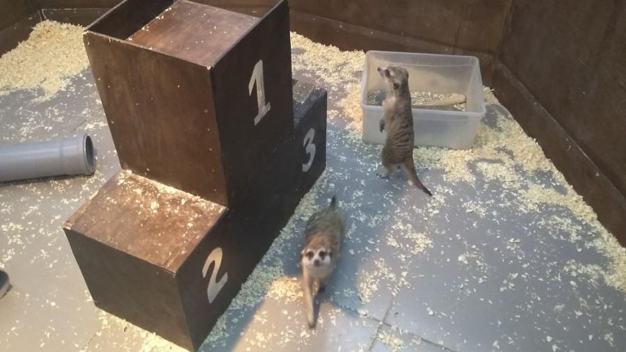 """Зоопарк """"Теремок""""."""