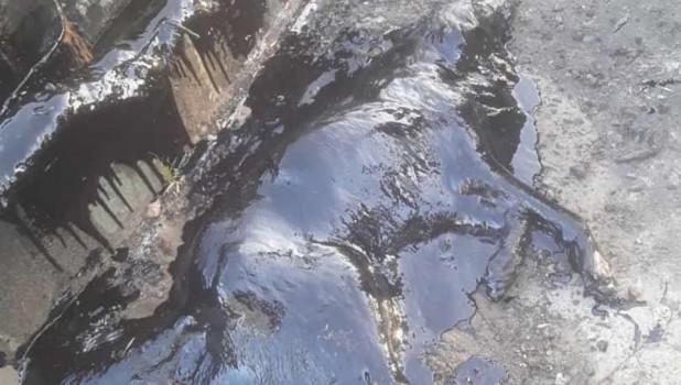 В Аргентине пса нашли в яме с гудроном
