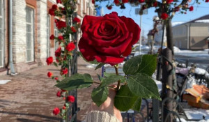 "Розы на ""Скамье желаний""."