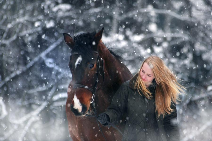 Лошадь, зима