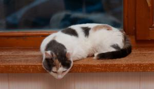 Приют-квартира для кошек.