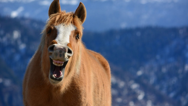 "Лошадь ""улыбается""."